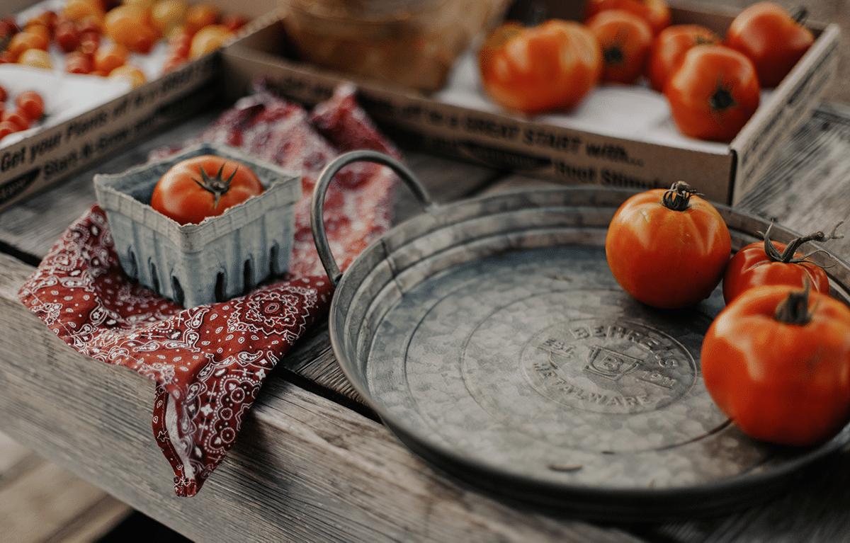 Fall tomato harvest on galvanized steel tray